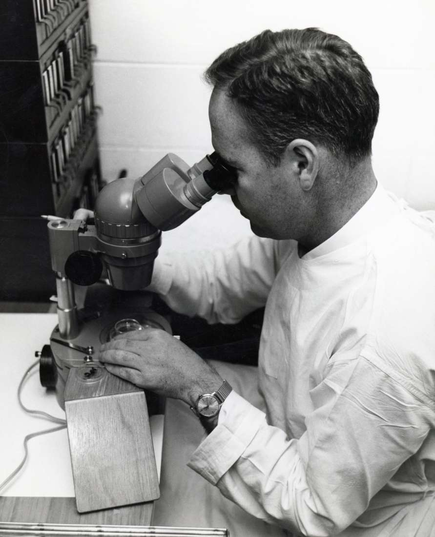 Professor Don Metcalf looking down a microscope