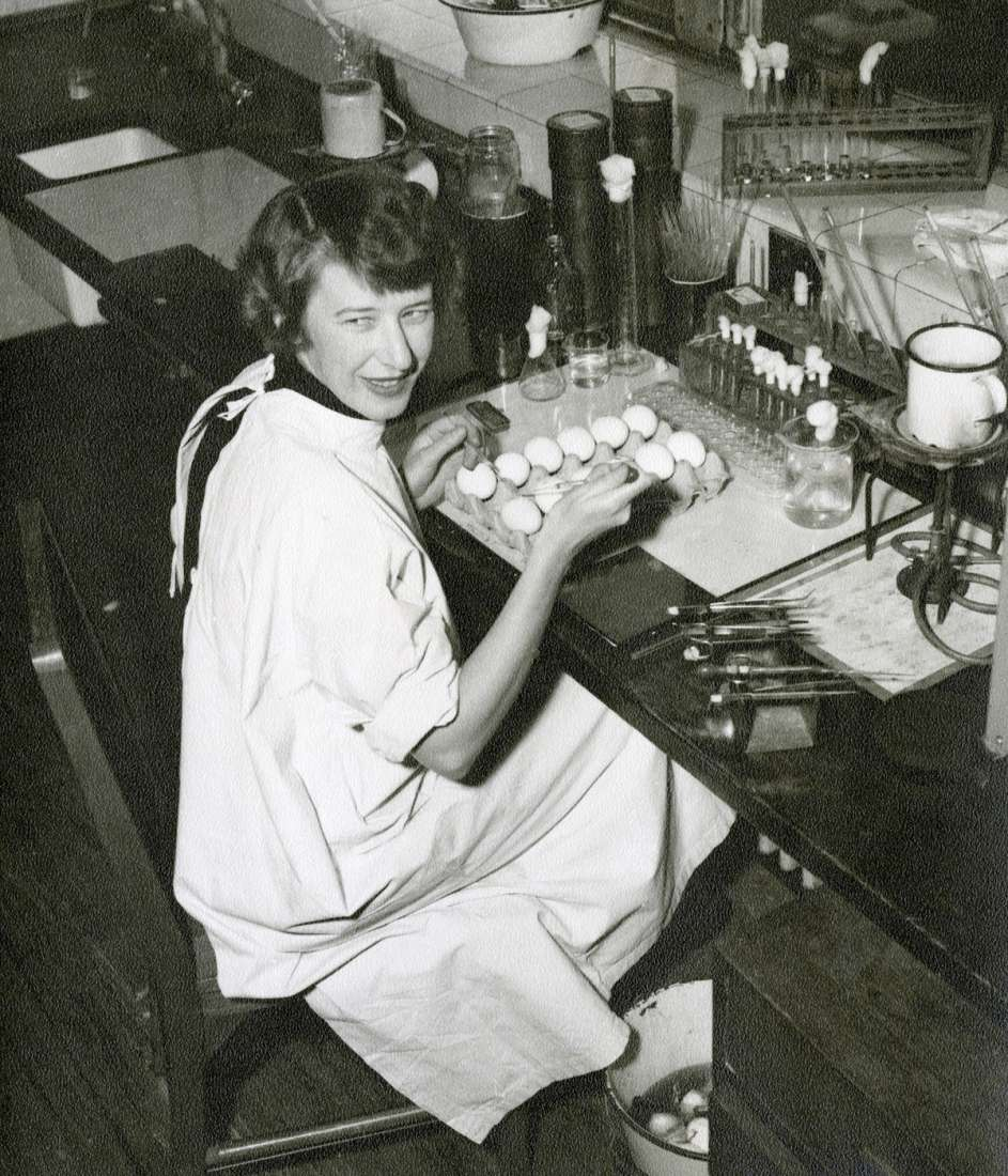 Dr Margaret Edney sitting at laboratory bench, looking away from tray of eggs waiting to be inoculated with virus.