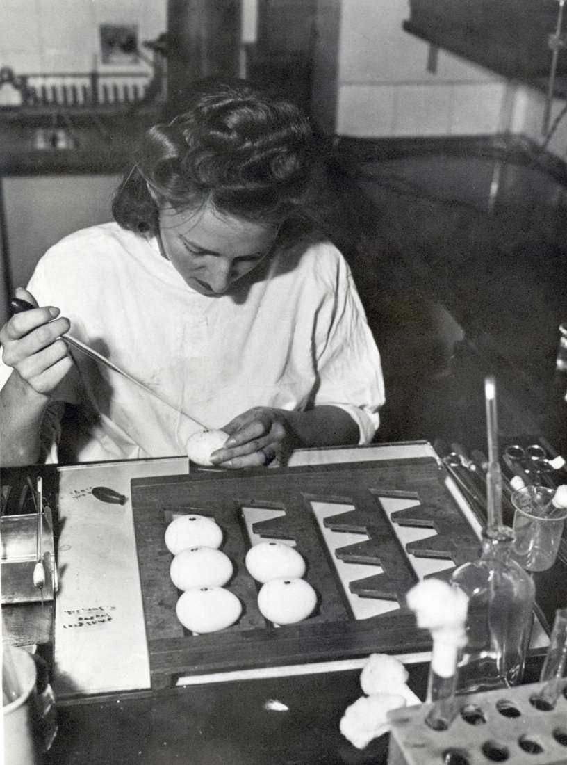 Marie McPherson sitting at lab bench with egg tray in front of her. She is using a pipette to inoculate egg.