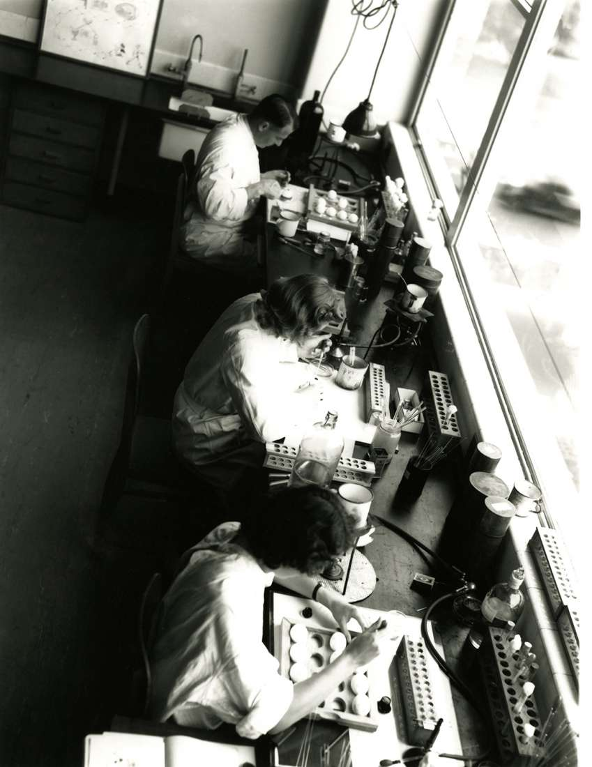 An aerial view of three people working in laboratory harvesting eggs at lab banches.