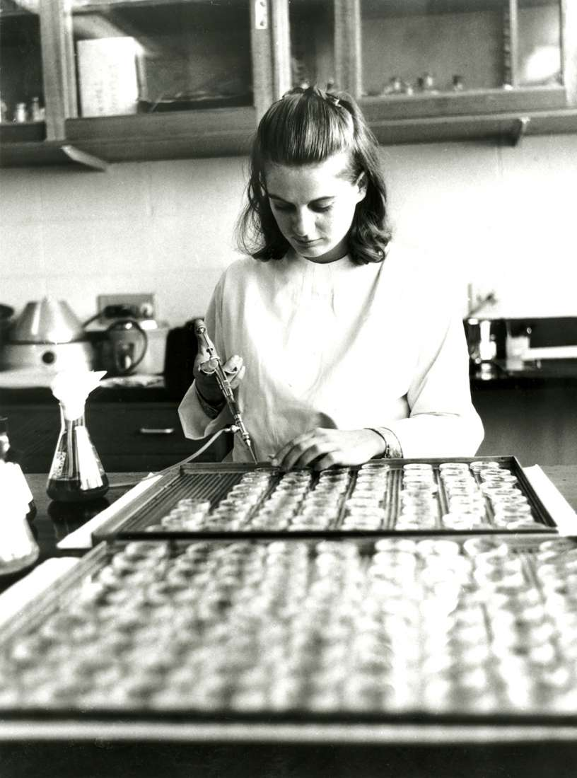 Laboratory Assistant Sue Stephens with Agar plates.