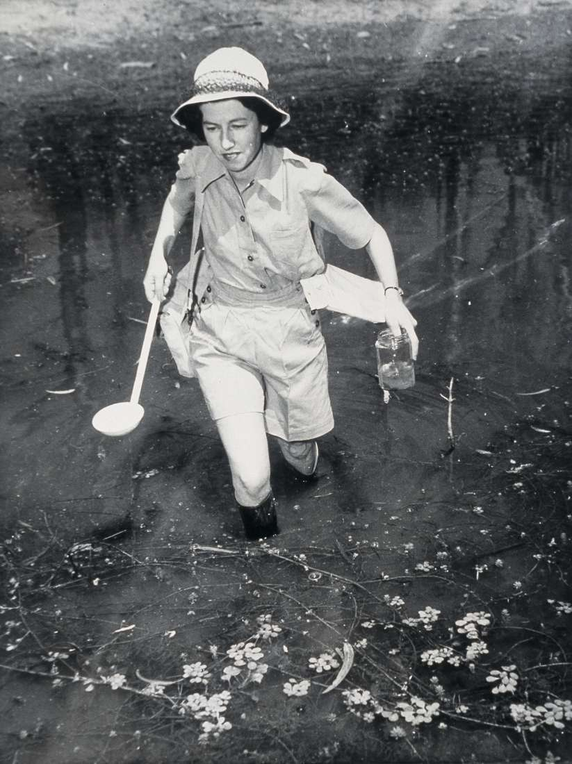 Mrs Nanyce Kent used a jar and ladle to collect mosquitoes from the waters of the Murray River.